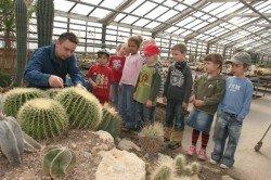Kaktus-Kindergarten bei Kakteen-Haage