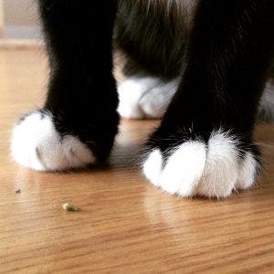 Problemas comportamiento gatos