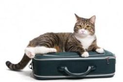 Gatos y viajes