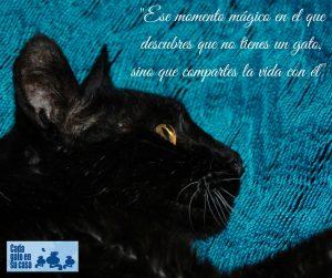 Compañeros de vida los gatos