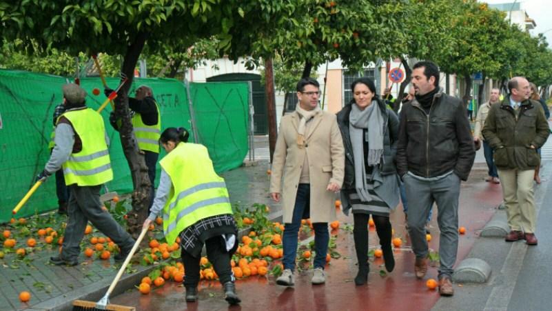 60 trabajadores con discapacidad contratados por Fepamic recogen las naranjas de 21.000 árboles