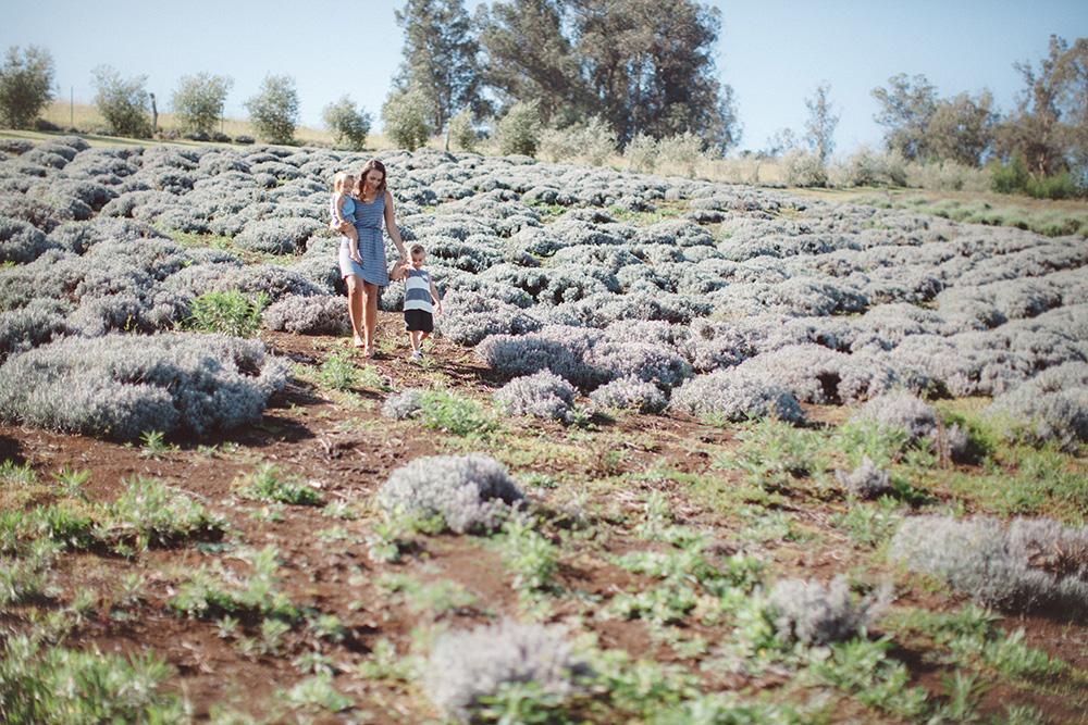 maui family photography at the lavender farm by cadencia photography