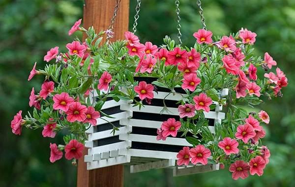 Петуния-Описание-и-уход-за-цветком-петуния-26