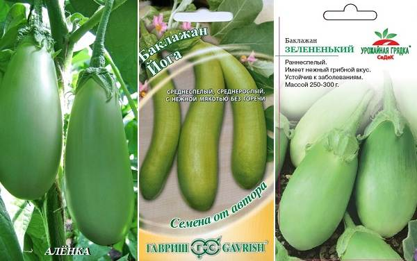 Выращивание-баклажанов-Как-и-когда-сажать-баклажаны-15