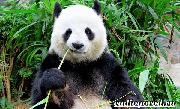 Бамбук-растение-Выращивание-бамбука-Уход-за-бамбуком-6