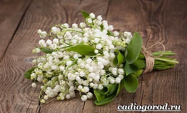 Ландыш-цветок-Описание-особенности-уход-и-выращивание-ландышей-11