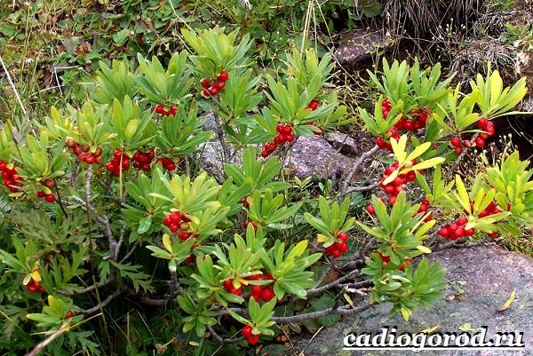Весенние растения занесенные в красную книгу