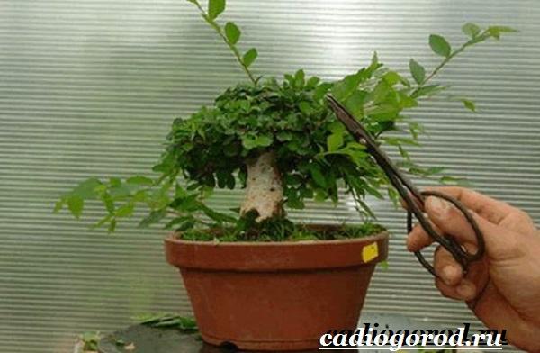 Белопероне цветок. Описание, особенности, виды и уход за белопероне-18