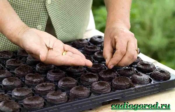 Эшшольция-цветы-Выращивание-эшшольции-Посадка-и-уход-за-эшшольцией-17