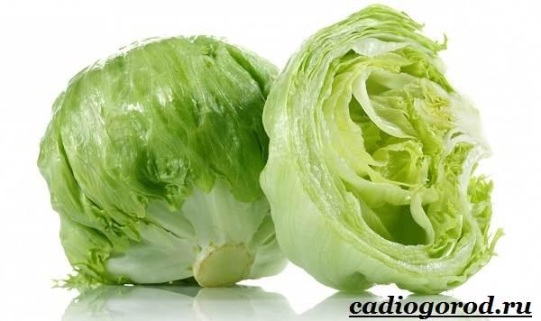 Выращивание-салата-Как-и-когда-сажать-салат-Уход-за-салатом-12-1