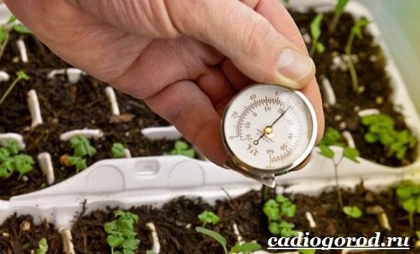 Брокколи-капуста-Выращивание-брокколи-Уход-за-брокколи-28