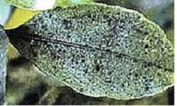 Гузмания-цветок-Описание-особенности-виды-и-уход-за-гузманией-13