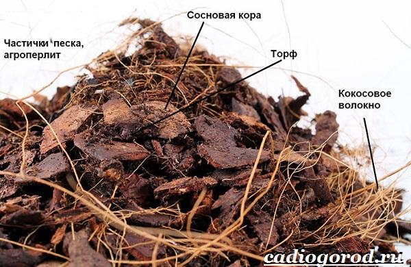 Фаленопсис-цветок-Описание-особенности-виды-и-уход-за-фаленопсисом-7