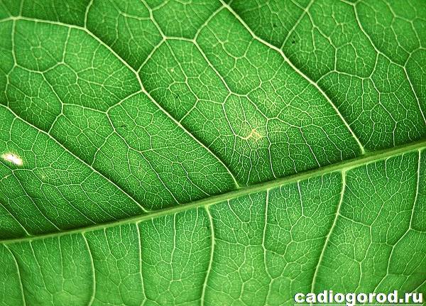 Что-такое-фотосинтез-Описание-особенности-фазы-и-значение-фотосинтеза-10