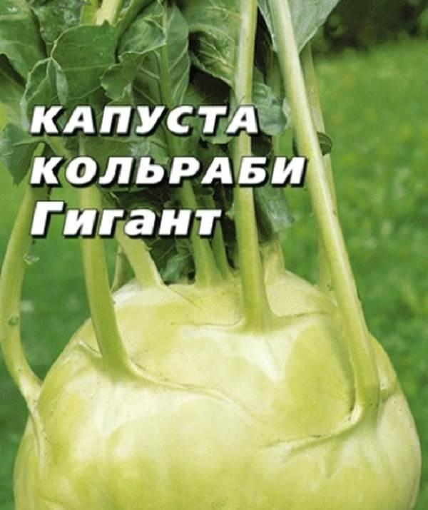 Капуста-кольраби-Описание-особенности-виды-и-выращивание-кольраби-10
