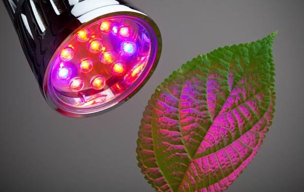 Фитолампа-для-растений-Как-выбрать-для-чего-нужна-и-сколько-стоит-фитолампа-3
