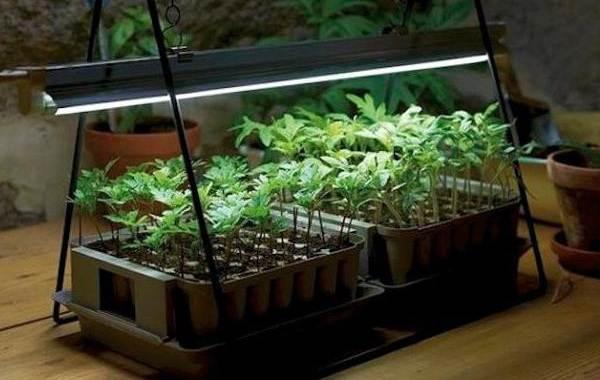 Фитолампа-для-растений-Как-выбрать-для-чего-нужна-и-сколько-стоит-фитолампа-5