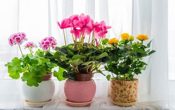 Полив-комнатных-растений-Факторы-виды-и-способы-полива-комнатных-растений-3