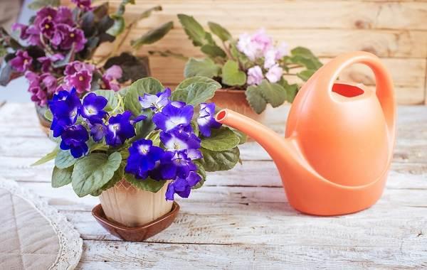 Полив-комнатных-растений-Факторы-виды-и-способы-полива-комнатных-растений-5