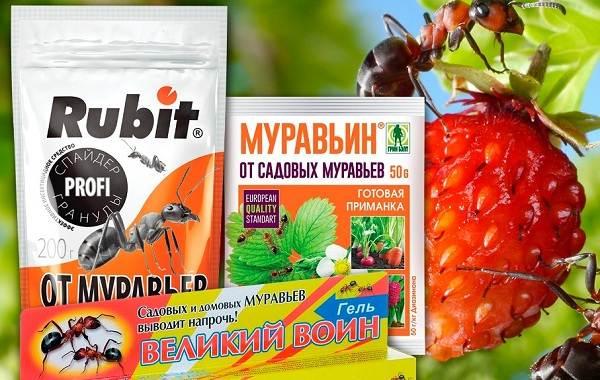 Муравьи-в-огороде-Польза-вред-и-как-бороться-с-муравьями-в-огороде-17