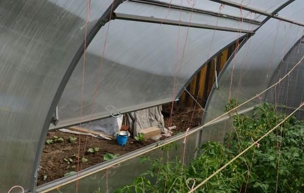 Почему-в-теплице-не-опыляются-помидоры-Как-и-чем-опылять-помидоры-в-теплице-12