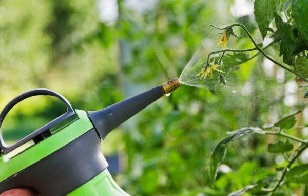 Почему-в-теплице-не-опыляются-помидоры-Как-и-чем-опылять-помидоры-в-теплице-14
