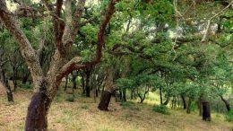 Imagen del Parque de los Alcornocales