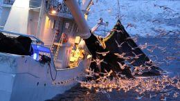 Barco pesquero faenando