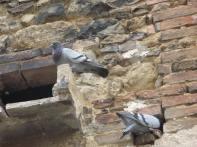 Bird Houses in the Stones