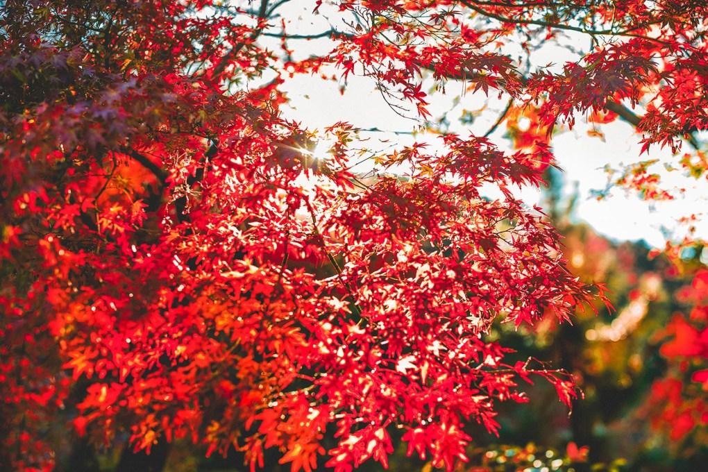 京都の紅葉スポット