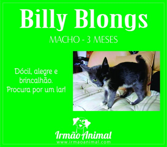 billy blongs