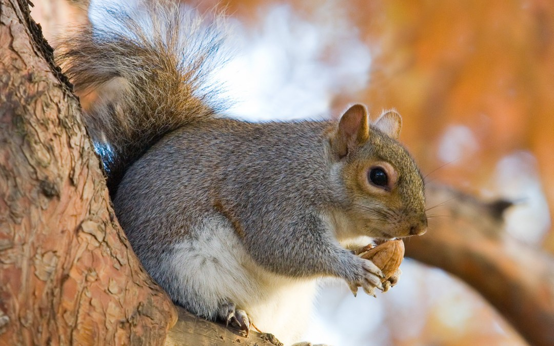 Ode to Dad: Squirrel Appreciation Day is Real!
