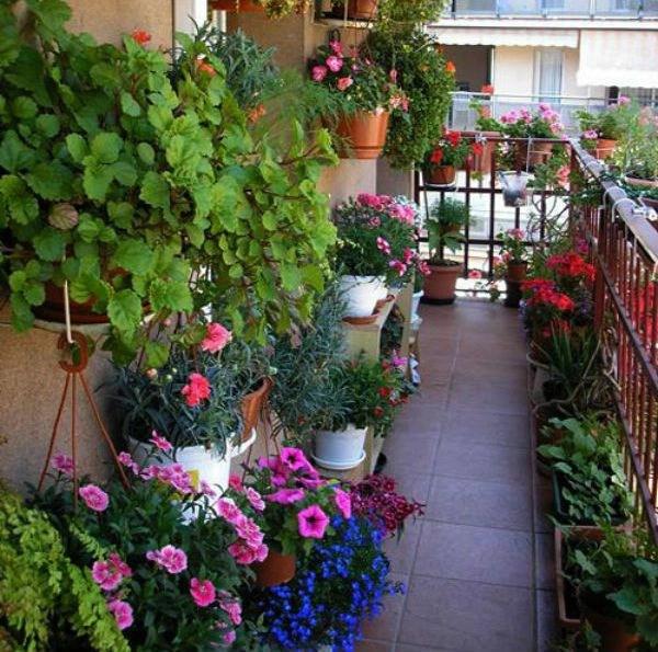 Phương pháp trồng cây xanh ở ban công sẽ mang lại sức sống và màu sắc cho ngôi nhà, làm cho không gian sống trở nên sống động, gần gũi với thiên nhiên và cũng là cách để hạ nhiệt cho những ngày nắng nóng.