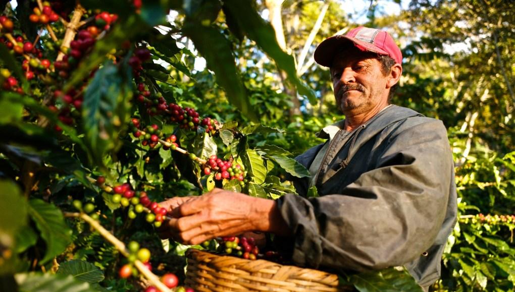 coffee farmer Nicaragua