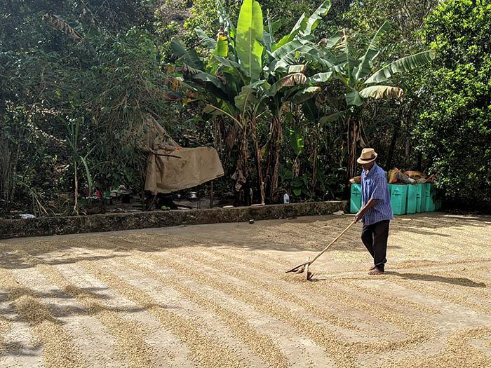 cafe kreyol coffee haiti farmers Savane Zombie