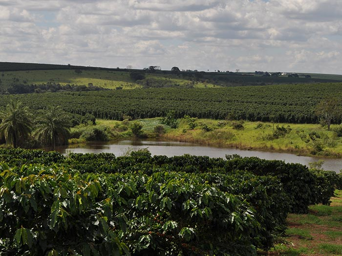 cafe kreyol organic coffee farmers Brazil Yellow Catuai Brazil