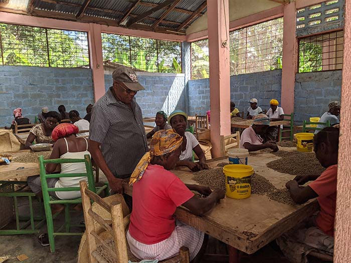 cafe kreyol organic coffee farmers COOPACVOD haiti 03