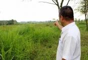 Hoang mang vì cò dồn dập hỏi mua đất