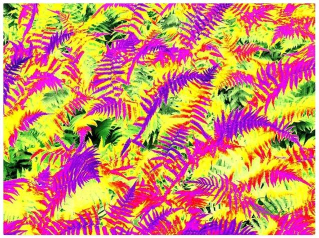 Dreaming Ferns