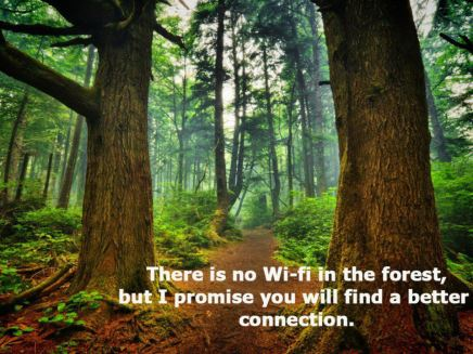 Better Connection in The Forrest