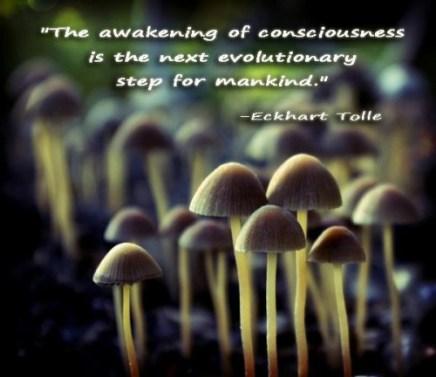 Evolutionary step -Tolle
