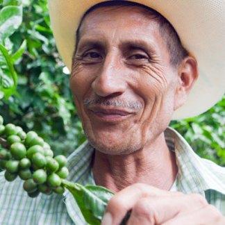 cafe typica honduran