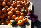 toddler halloween
