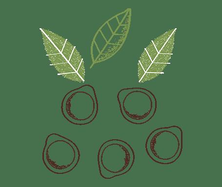 Cialde compostabili