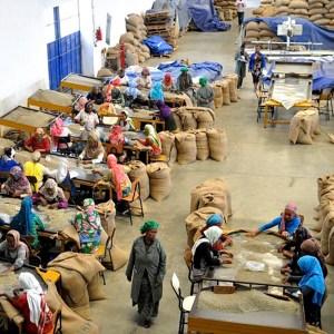 FATHERS_COFFEE_衣索比亞咖啡處理站