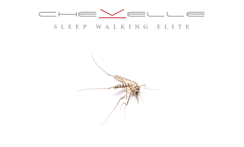 Sleep Walking Elite: An Analysis