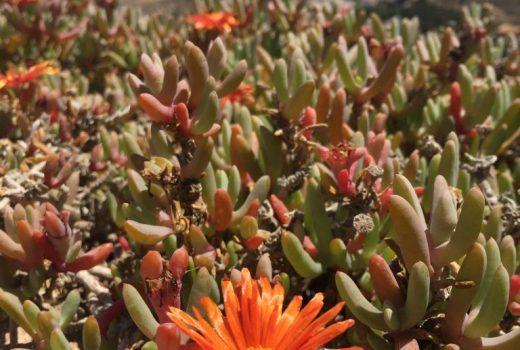 alicante, spain, flowers, flores, espana, travel
