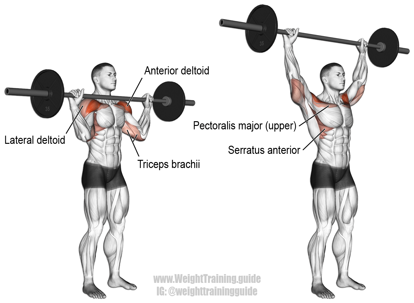 barbell-military-press.png
