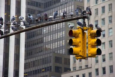 NYCTrafficJam