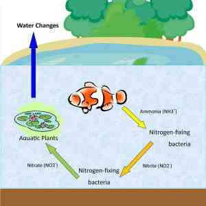 Review your nitrogen cycle!